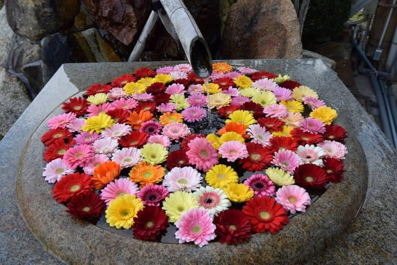 花手水 展示しています。